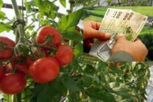 MADR. Sprijinul pentru tomate - Cererile se depun prin fax, poştă sau în format electronic