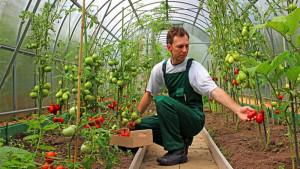 APIA. Instalarea tinerilor fermieri - Terenuri de până la 50 ha – în concesiune