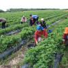 Munca prestată de zilieri - noi reglementări
